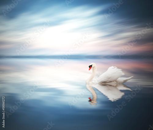 cisne en el lago azul