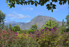 View On Mountains With Tropica...