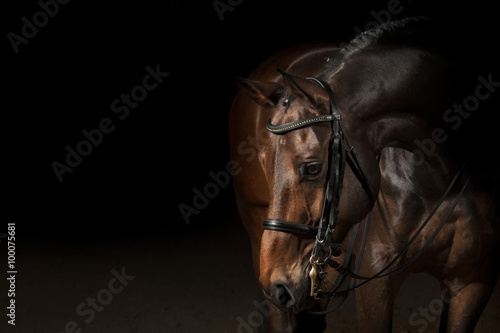 In de dag Paardrijden Portrait of a sport dressage horse