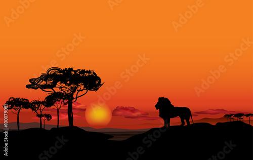 Afrykański krajobraz z sylwetka zwierzę lwa. Tło zachód słońca sawanny