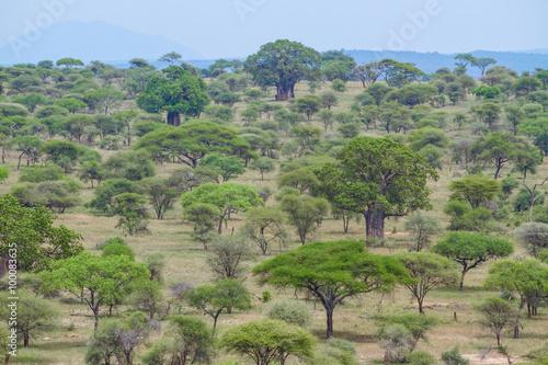 Papel de parede  Baobás no Parque Nacional de Tarangire