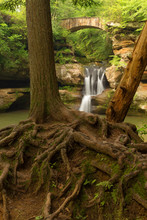 Tree Roots In Front Of Upper Falls At Old Man's Cave, Hocking Hills State Park, Ohio.