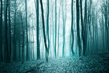 Mystic turquoise blue color light foggy forest landscape background.