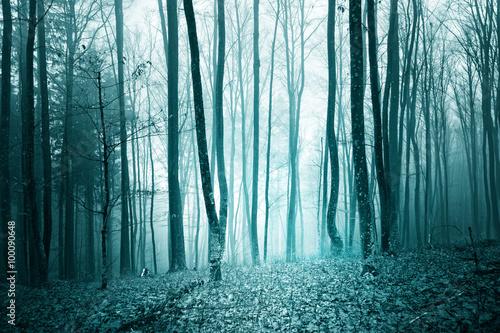 Mystic turquoise blue color light foggy forest landscape background.
