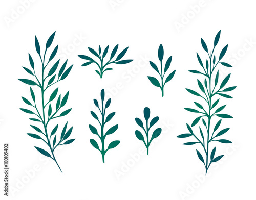 Photo  Set of branches with leaves and herbs for design