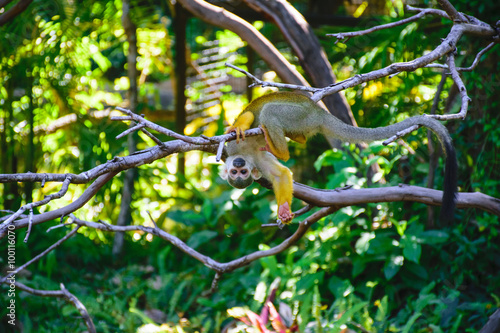Foto op Plexiglas Aap Squirrel monkeys