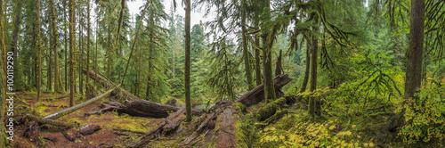 Fotografía  Hoh Rainforest, Olympic National Park, Washington state, USA