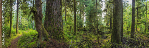 Fotobehang Bossen Hoh Rainforest, Olympic National Park, Washington state, USA
