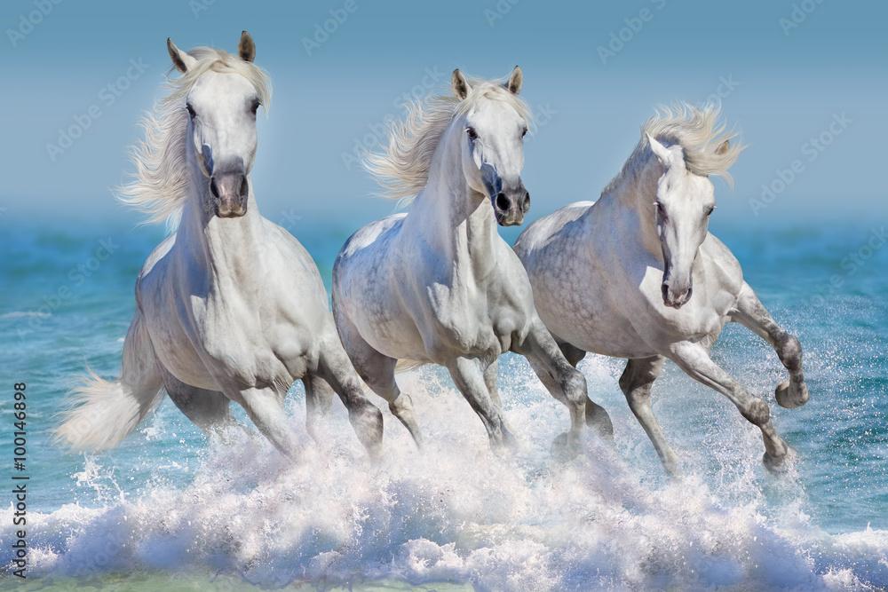 Trzy białe konie biegną galop w fale w oceanie