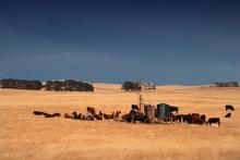 Rurall Scene In South Australi...