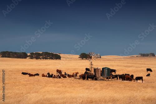 Fotobehang Australië rurall scene in South Australia, Australia