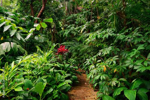 Tropical Garden, Cairns, Queensland, Australia