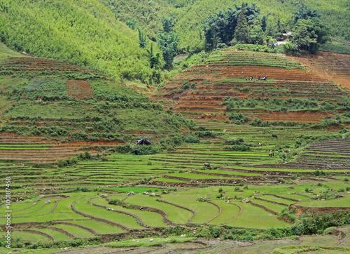 Foto op Canvas Pistache view of village CatCat with rice terraces