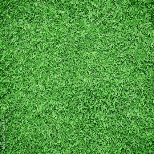 Foto op Plexiglas Groene Green grass background. Top view