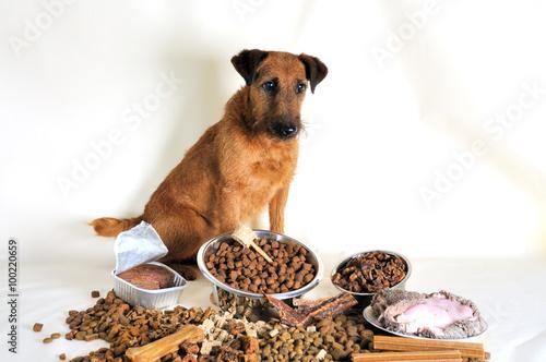 Fotografie, Obraz  Hund mit verschiedenem Futter