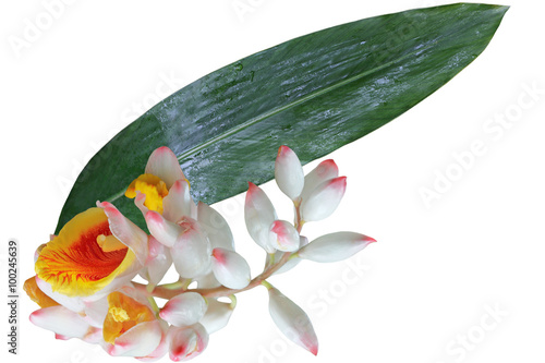 Sell Ginger Flower and Leaf Wallpaper Mural