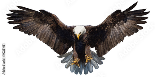 Valokuvatapetti Bald eagle landing hand draw and paint on white background vector illustration
