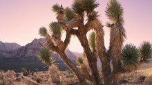 Time Lapse Of Desert Dusk Falling Over Joshua Tree And Distant Mountain