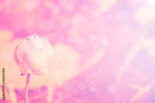 Fototapeta lotus pink background obraz na płótnie