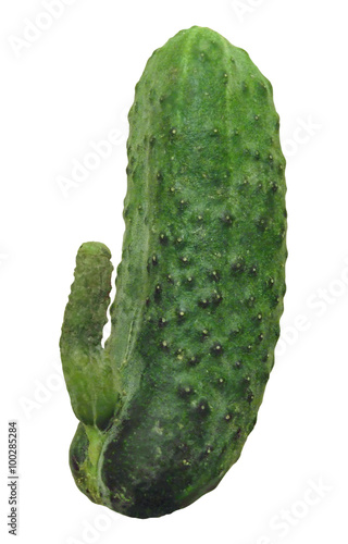 Photo Cucumber with appendage in the form of penis