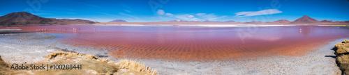 Garden Poster Flamingo Panorama of Laguna Colorada