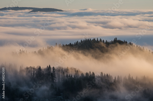 Poster Morning with fog Carpathian mountains in the clouds, seen from Wysoka mountain in Pieniny, Poland
