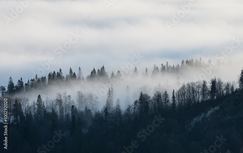 Door stickers Morning with fog Carpathian mountains. Trees in the clouds, seen from Wysoka mountain in Pieniny, Poland