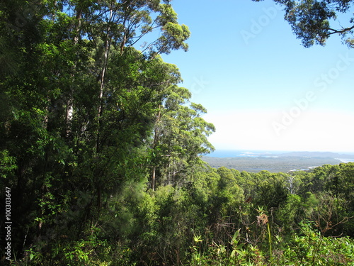Valokuva  Karri Trees, West Australia