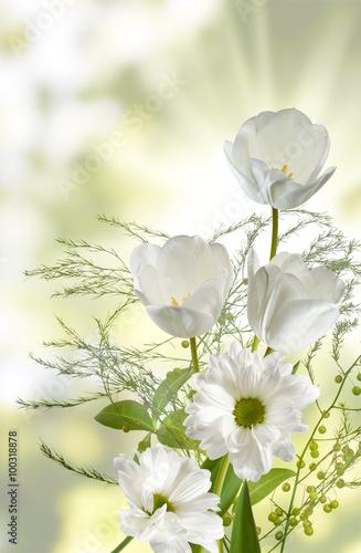 wizerunek-tulipany-w-ogrodowym-zakonczeniu