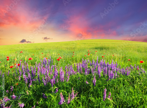 Cadres-photo bureau Lavende Field with flowers in mountain valley. Natural summer landscape.