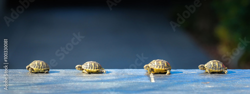 Foto op Canvas Schildpad quatre jeune tortues en file indienne