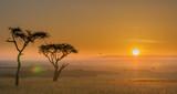 Fototapeta Sawanna - Acacia africana al tramonto