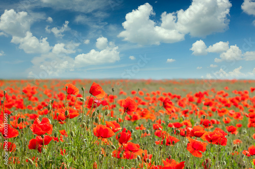 Fotobehang Cultuur Summer poppy field landscape with blue sky and clouds