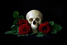 Vanitas. Human Skull With Red Roses Isolated Over Black Bagkground. Gothic Still Life. Book Or Halloween Design