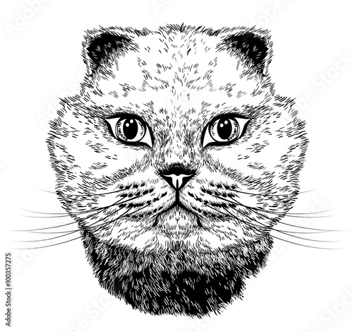 Photo sur Toile Croquis dessinés à la main des animaux Cat portrait