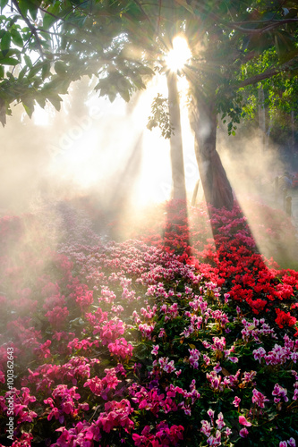 The romantic pink flowers on sunrise