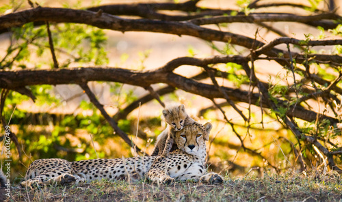 Mother cheetah and her cub in the savannah. Kenya. Tanzania. Africa. National Park. Serengeti. Maasai Mara. An excellent illustration.