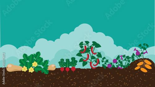 Kitchen vegetable garden flat design Canvas Print
