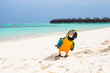 Wild colorful bright parrot on white sand at tropical island in the Indian Ocean