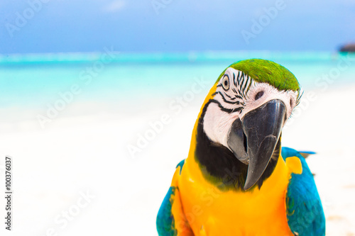 Foto op Canvas Papegaai Closeup colorful bright parrot on white sandy beach at tropical island