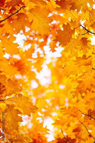 Foto Rollo Basic - autumn leaves, very shallow focus (von photolink)