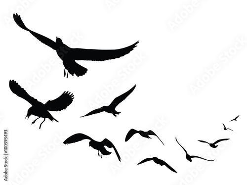 seagull silhouette on white background, Vector Illustration Wallpaper Mural