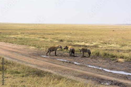 Montage in der Fensternische Afrika タンザニアのセレンゲティ国立公園