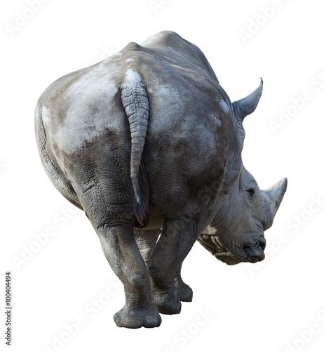 Spoed Foto op Canvas Neushoorn white rhinoceros (Camelus bactrianus) over white background