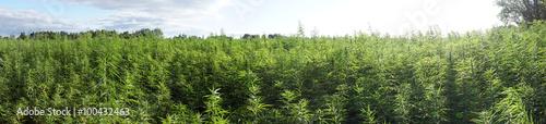 marijuana Tapéta, Fotótapéta