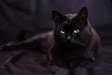 Black Cat  Lying  On A Black Background