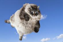 Funny Cat Levitate In Blue Sky