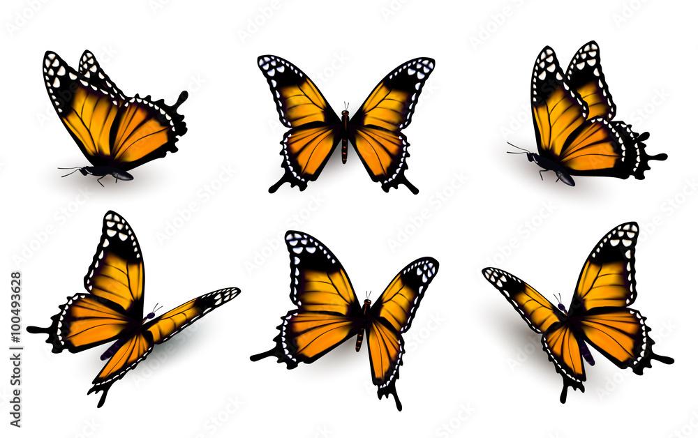 Fototapeta Six butterflies set. Vector.