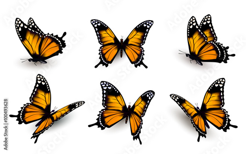 Vászonkép Six butterflies set. Vector.