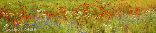 Panoramic background of blossoming wild flowers - 100501889